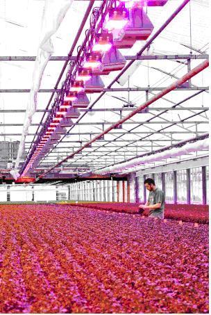 Fionia 照明公司提供的温室专用灯具图