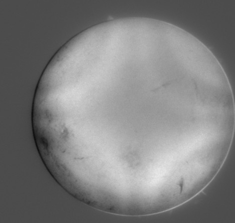 ONSET观测到的国内首张红外10830波段太阳全日面像
