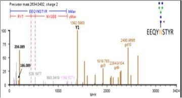 IgG糖肽EEQYNSTYR碎片分析图