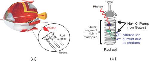 单光子探测技术资料图