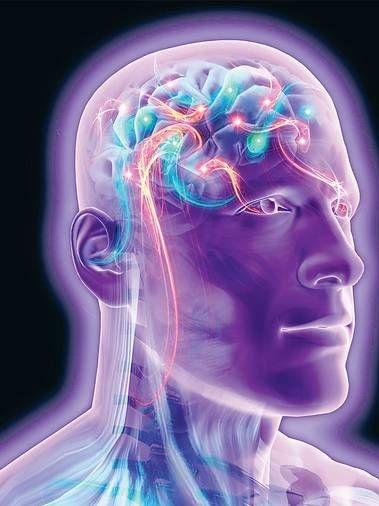 新型核磁共振成像扫描仪获取的大脑图像,片状平行神经纤维呈直角交叉