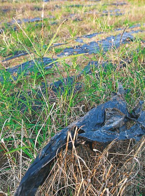 海南农业地膜清理与回收难 一年消耗量超万吨
