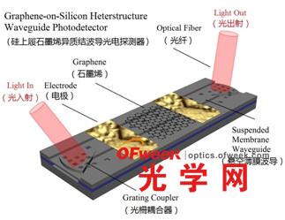 硅上履石墨烯异质结波导光电探测器