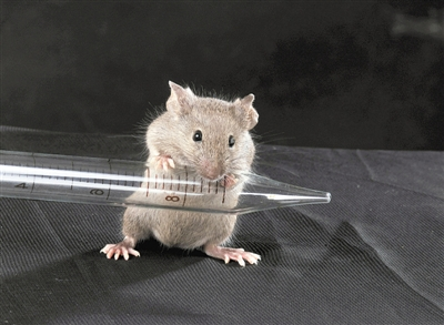 并为获得遗传操作动物模型提供了重要手段