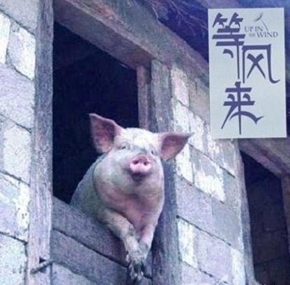 """智能家居""""猪""""已就位 等风来?"""