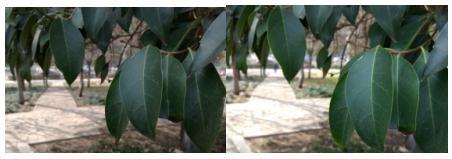 四款国产手机相机自动拍照模式对比:Flyme更出色